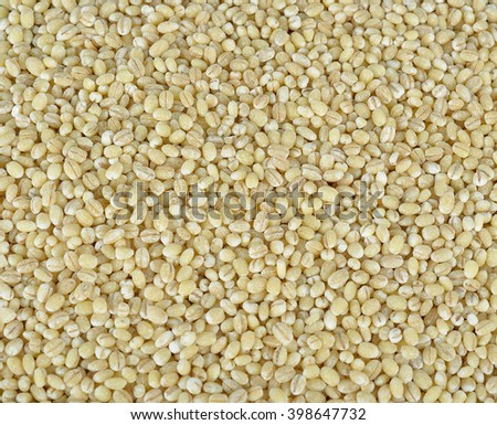 Pearl barley as a background or texture. - stock photo