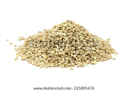 pearl barley grain on white background  - stock photo