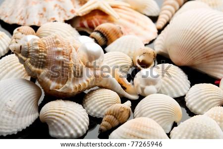pearl on the seashell . The exotic sea shell . treasure from the sea . - stock photo