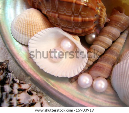 pearls and shells placed in big shell - stock photo