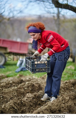 Peasant woman cultivating potatoes on a fresh plowed field - stock photo
