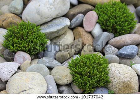 pebble stones texture with green flowers - stock photo