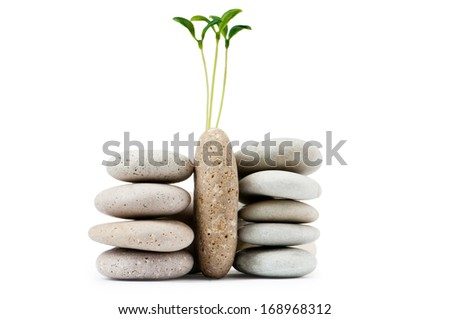 Pebbles and seedlings - alternative medicine concept - stock photo