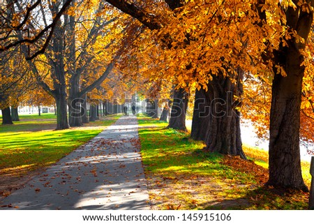 Pedestrian walkway for exercise lined up with beautiful tall autumn trees - stock photo
