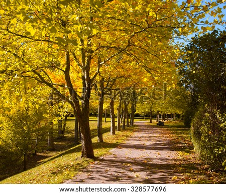 Pedestrian walkway for exercise lined up with beautiful tall trees, in autumn team - stock photo