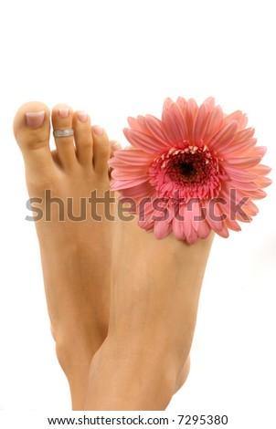 Pedicured feet and gebera dasies - stock photo