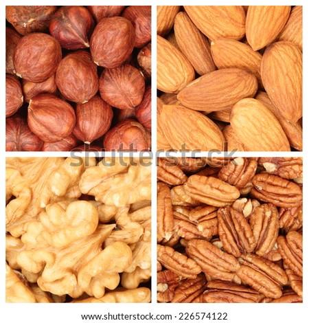 Peeled fresh nuts - pecans, hazelnuts, walnuts, almonds - stock photo