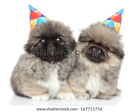 Pekingese puppies in party cones on white background - stock photo