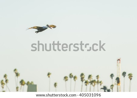 Pelican bird flying over the sea with palm trees in the background - stock photo