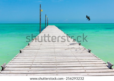 Pelican diving for fish near pier on Holbox Island, Mexico - stock photo