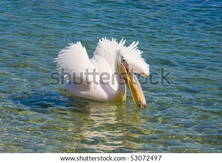 Pelican floats in the sea with outstretched wings - stock photo