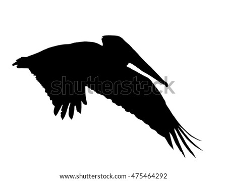 Pelican In Flight Profile Silhouette illustration Isolated on White