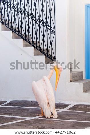 Pelican on a narrow street of the Greek island - stock photo