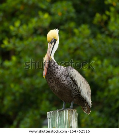 Pelican on Post - stock photo
