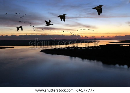 Pelican Parade: A string of brown pelicans in early morning flight over beach marsh land - stock photo