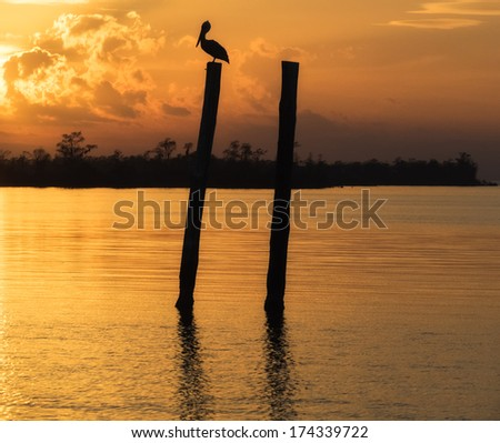 Pelican sitting on post along bayou in Louisiana at sunset.