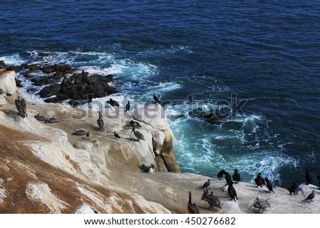 Pelicans resting on bluffs nears La Jolla Cove beach in San Diego, California - stock photo