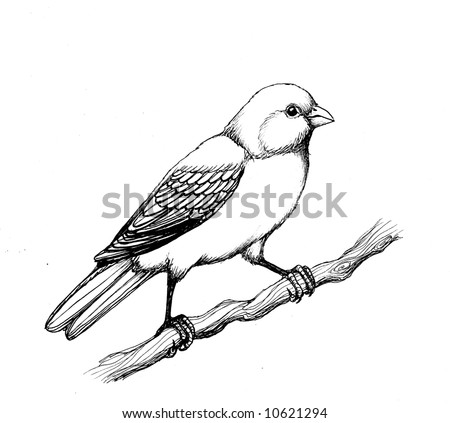 Yellow finch drawings for Finch coloring page