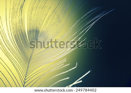 pen feather fragment close up in the dark - stock photo