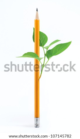 Pencil and sprout on a white background - stock photo