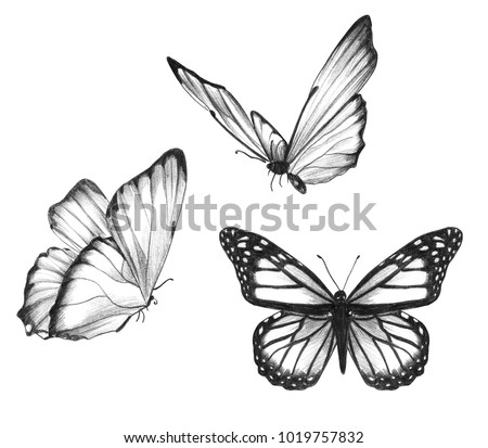Pencil drawing of butterflies illustration set