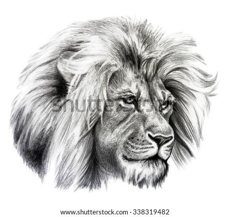 Pencil Sketch Lion Sto...