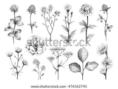 Pencil drawings wild flowers stock illustration 476562745 shutterstock thecheapjerseys Image collections