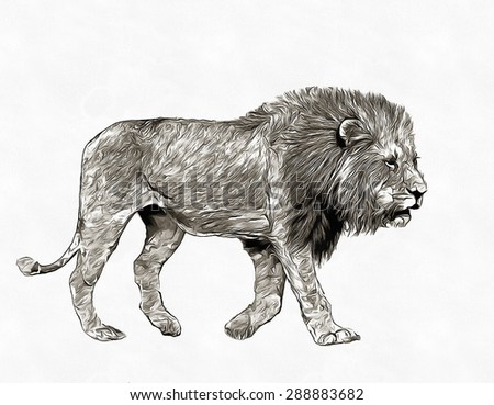 Pencil sketch lion in savannah - stock photo