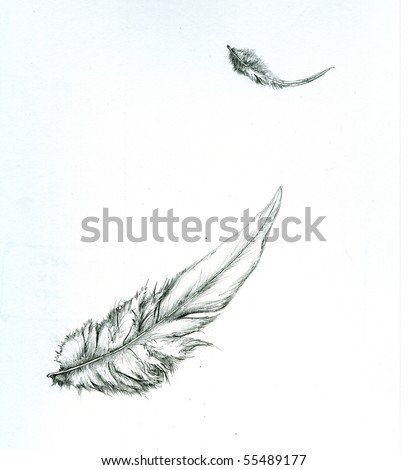 Pencil sketch of two bird feathers