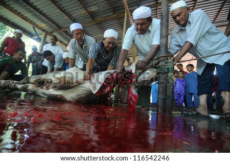 PENDANG - NOVEMBER 17 : Unidentified Malaysian Muslims help in slaughtering a cow during Eid Al-Adha Al Mubarak, the Feast of Sacrifice November 17, 2010 in Pendang, Malaysia - stock photo