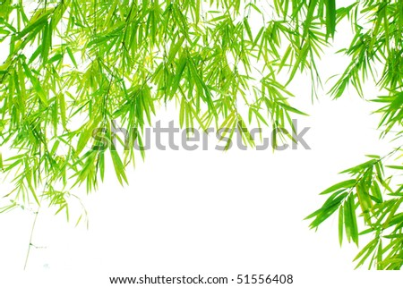 Pendant bamboo leaves background in spring sunny day.