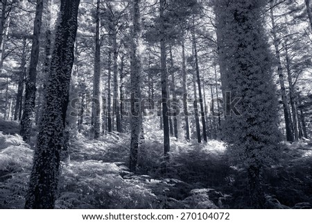 Peneda Geres forest, north of Portugal. Black and white infrared toned blue. - stock photo