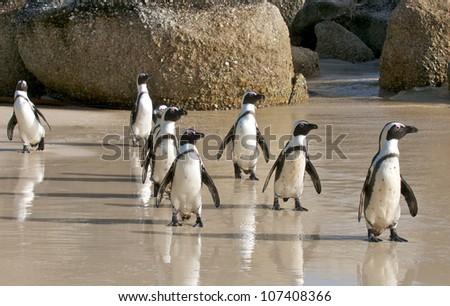Penguin aerobics - stock photo