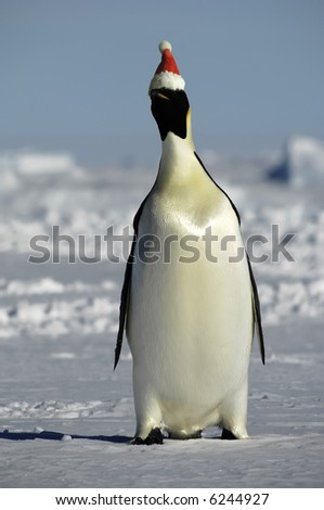 Penguin at Christmas - stock photo