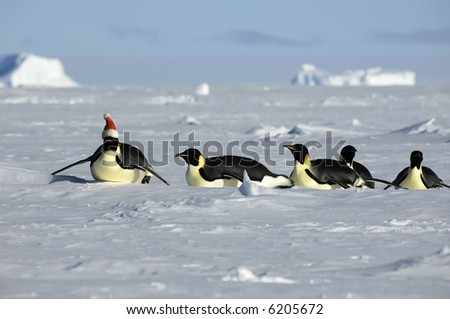 Penguin Christmas procession - stock photo