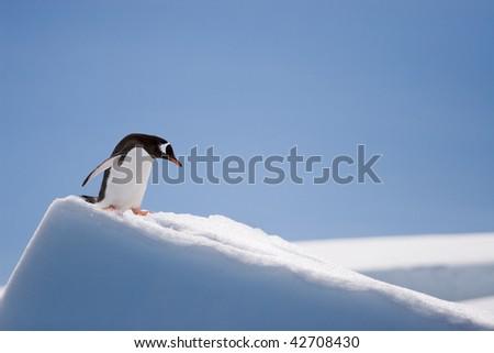 penguin climbing down a snow hill - stock photo