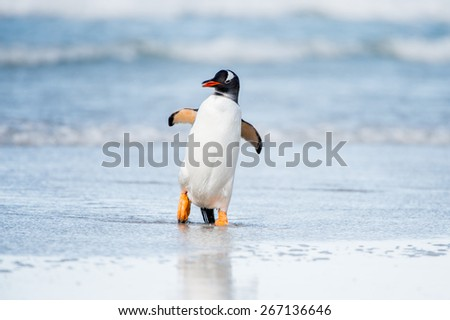 Penguin dances in the water - stock photo