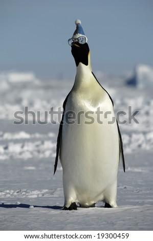 Penguin having fun - stock photo
