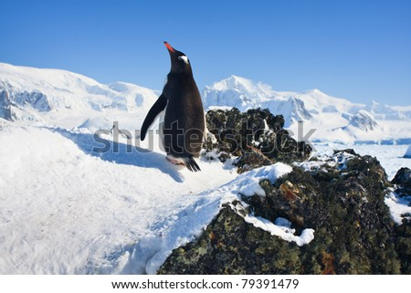 penguin is standing on the rocks, mountains in the background - stock photo