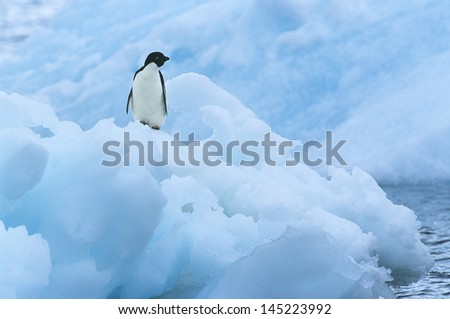 Penguin on iceberg - stock photo