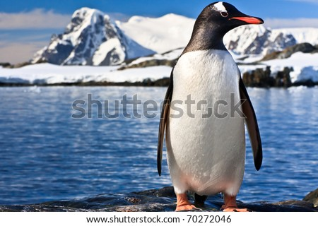 penguin on the stone coast of Antarctica, mountains in the background - stock photo