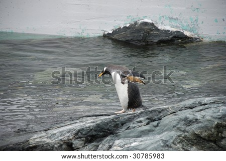 penguin on the water