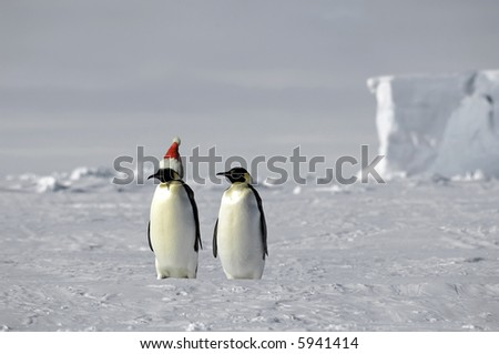 Penguin pair celebrates Christmas on ice
