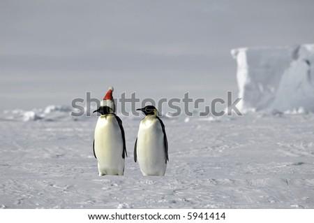 Penguin pair celebrates Christmas on ice - stock photo