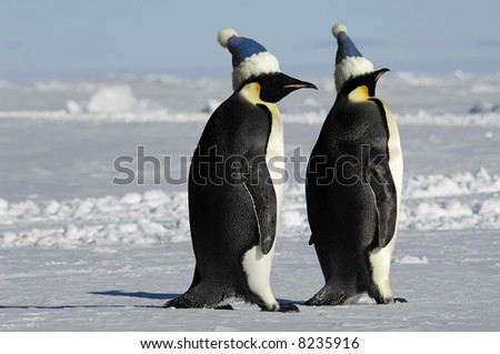 Penguin pair with caps - stock photo
