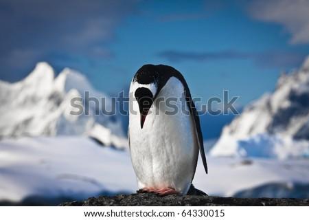 penguin standing on the rocks - stock photo