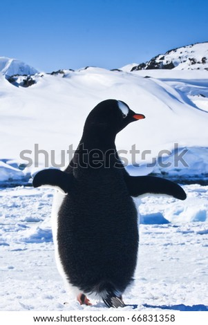 penguin standing on the rocks covered snow. Antarctica - stock photo