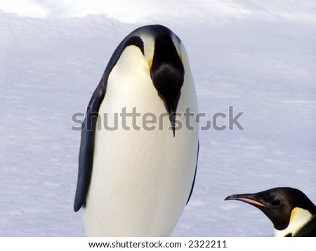 Penguin Talk