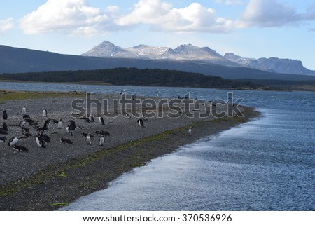 Penguins at the beach - stock photo