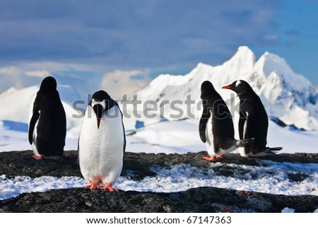 penguins dreaming sitting on a rock in Antarctica, mountains in the background - stock photo